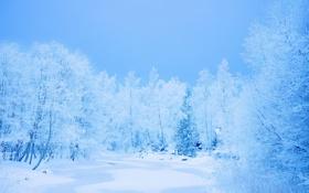 Обои зима, лес, снег, деревья, мороз