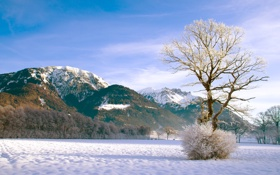 Обои лес, куст, зима, горы, снег, дерево