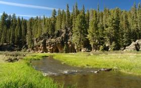 Обои лес, пейзаж, природа, парк, река, США, Невада