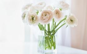 Картинка цветы, окно, ваза