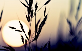 Картинка небо, солнце, макро, закат, природа, растение, цвет
