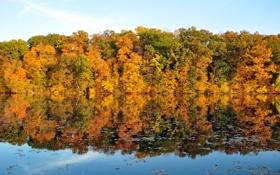 Обои листья, осень, вода. отражение