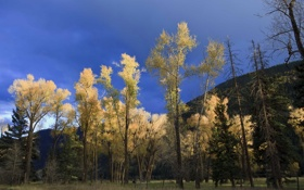 Обои осень, лес, небо