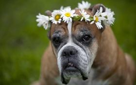 Обои друг, цветы, взгляд, собака