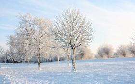 Обои зима, иней, небо, солнце, свет, снег, деревья
