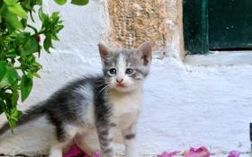 Обои лето, глаза, взгляд, котенок, фон