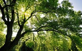 Обои лес, листья, солнце, лучи, свет, trees, sun