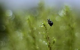 Картинка трава, капли, блики, растение, улитка