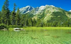 Обои лес, свобода, вода, деревья, горы, река, австрия