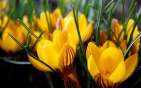 Обои макро, цветы, фото, обои, фоновые обои
