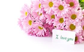 Обои букет, белый фон, розовые, цветы