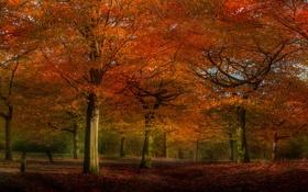 Обои осень, деревья, природа