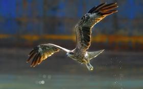 Картинка вода, брызги, птица, крылья, клюв