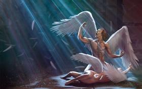 Обои осколки, перья, ярость, витраж, Ангелы, крик, падшие