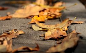 Обои осень, асфальт, листья