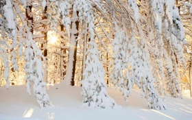 Обои лес, солнце, снег, природа