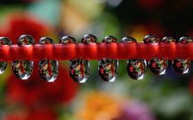Картинка вода, капли, роса, отражение