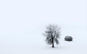 Картинка пейзаж, туман, дом, дерево