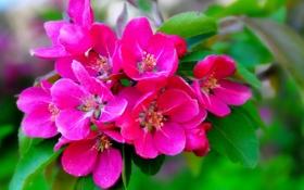 Обои макро, ветка, цветение