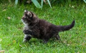 Обои лето, трава, лапа, котёнок