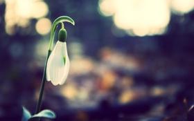 Картинка лес, белый, цветок, макро, природа, блики, растение