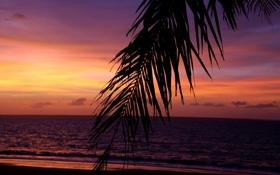 Картинка вечер, тропики, небо, пальмы, море