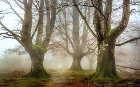 Обои осень, лес, трава, деревья, ветки, природа, листва