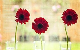 Картинка цветы, стиль, фон