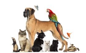 Картинка собаки, кот, птицы, звери, черепаха, улитка, попугай