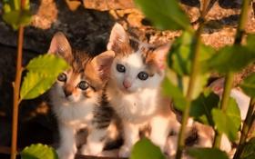 Обои кошки, природа, фон