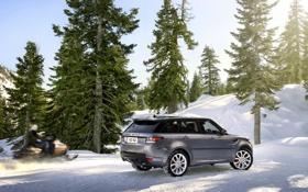 Обои Зима, Авто, Снег, Лес, Серый, Land Rover, Range Rover
