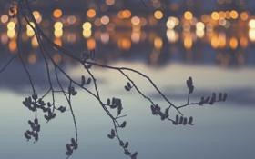 Картинка свет, город, озеро, ветка, весна, боке