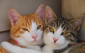 Картинка глаза, взгляд, коты, дружба