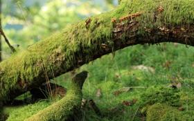Обои трава, дерево, грибы, мох