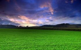 Картинка поле, небо, трава, природа, фото, пейзажи, зелёный