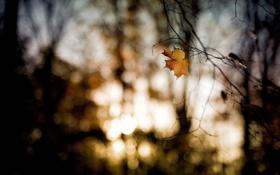 Картинка осень, Октябрь, ветки, лист, боке