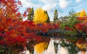 Картинка осень, листья, деревья, природа, пруд, парк, Япония