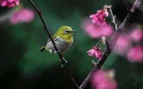 Картинка цветы, дерево, птица, ветка, арт, желтая