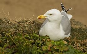 Картинка трава, птица, чайка