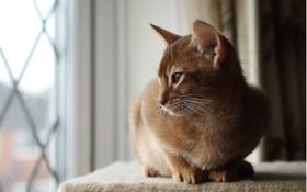 Обои кот, леж, котэ, окно, внимание, кошка