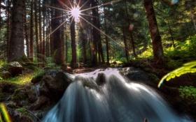 Обои лес, деревья, камни, водопад, лучи солнца