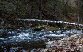 Обои осень, вода, дерево, камень