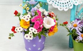 Обои Ромашки, Колокольчики, Гвоздики, Цветы, фото