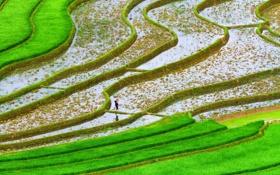 Обои зелень, вода, поля, плантации