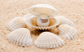 Картинка песок, море, природа, sea, nature, pearl, sand