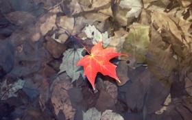 Обои желтый, Природа, осень, вода, земля, лужа, листок
