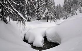 Обои зима, лес, вода, снег, деревья, ручей, сугробы