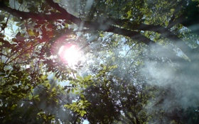 Обои лес, солнце, лучи, свет, деревья, ветки, листва