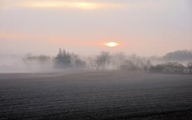 Картинка пейзаж, поле, утро, туман