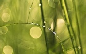 Обои капли, трава, блики, роса, зелень, травинка, природа